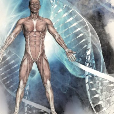 3D sketched image of a male figure with muscle map on a medical background with DNA strands