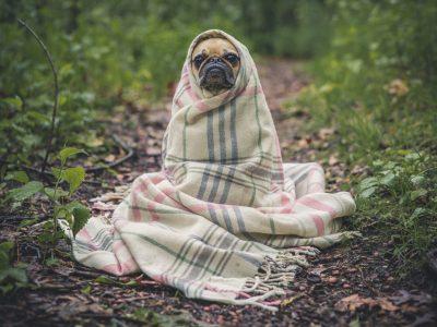 photo-meditatiehond